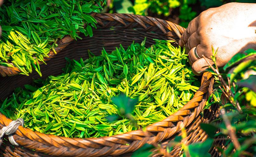 Kosmetyki na bazie zielonej herbaty matcha sklepu Japan Store