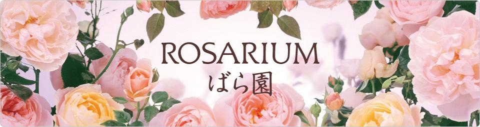 Shiseido ROSARIUM Rose Body Milk RX